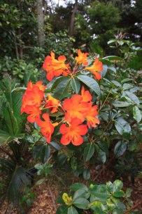 Auckland Botanic Gardens